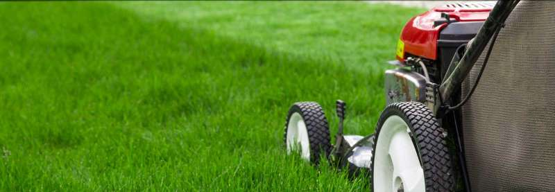 Lawn Mowing Services in Rolando Park