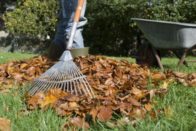 Landscape Maintenance in San Carlos