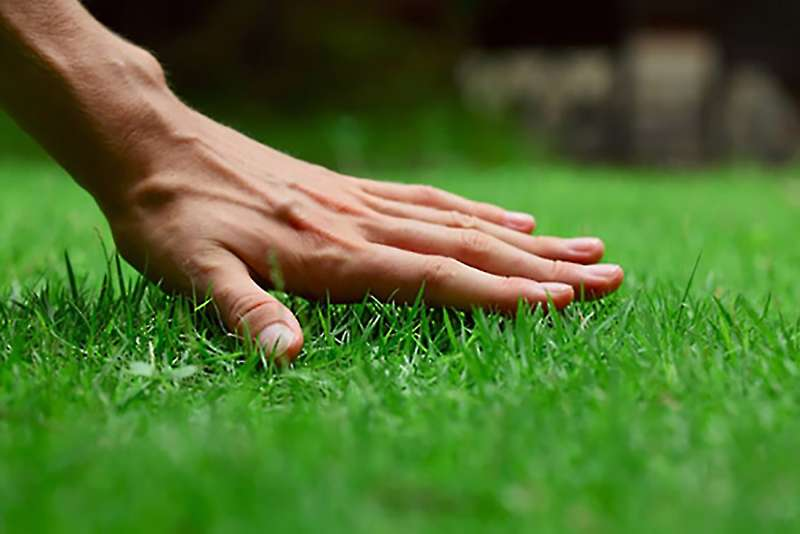 Commercial Landscaping in Linda Vista