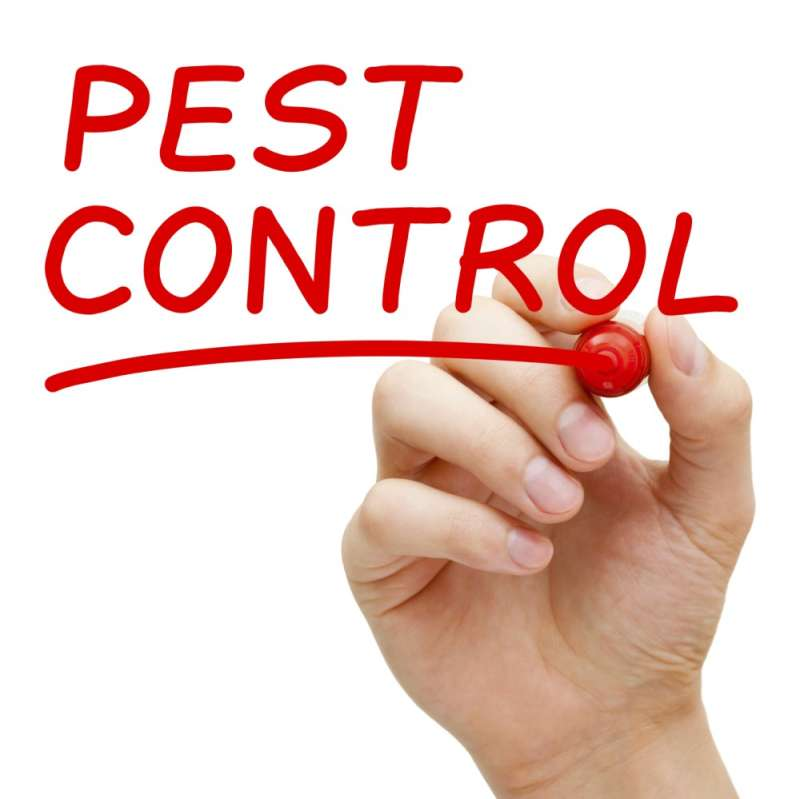 peachtree pest control in Escondido