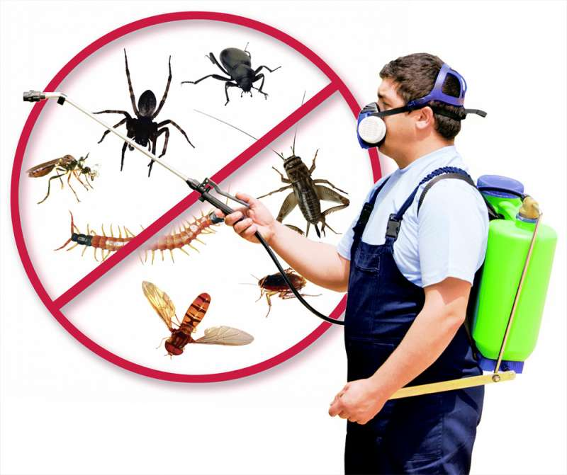 pest control flies in San Diego