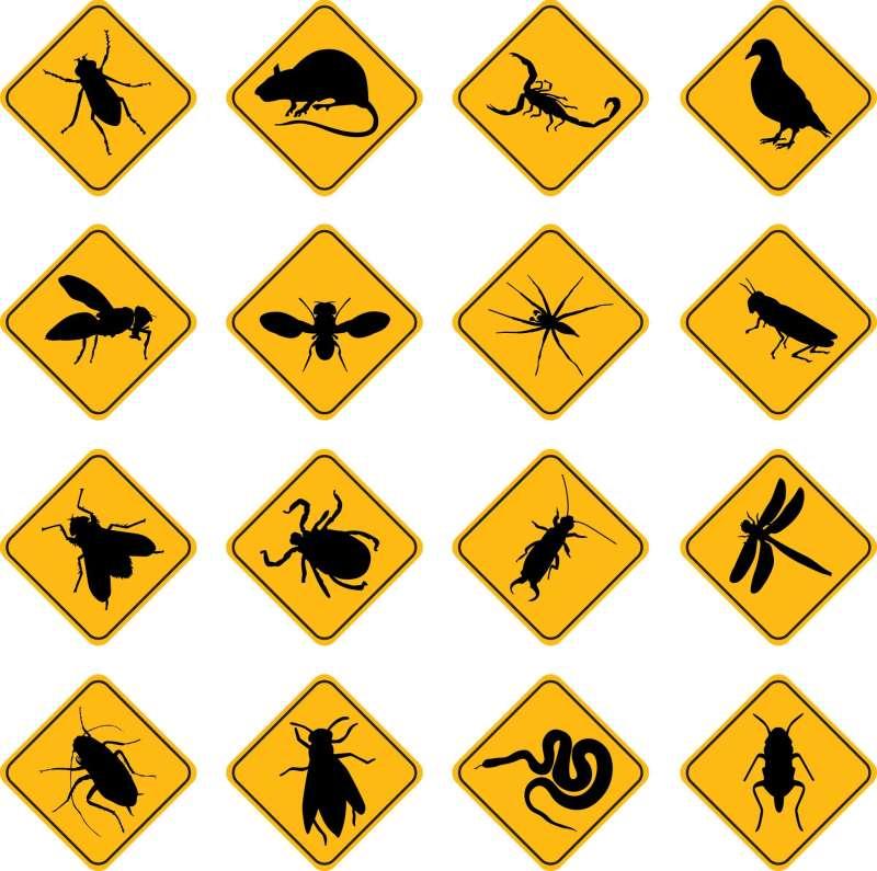 urgent pest control in San Diego
