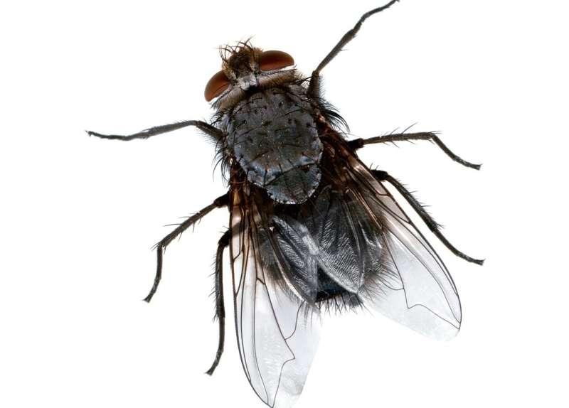 pest control flies in Allied Gardens