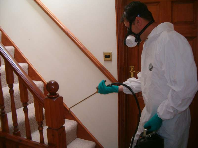 local pest control services in San Diego