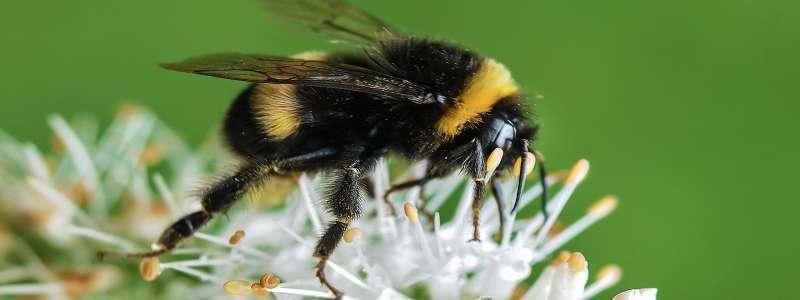 pest control flies in Casa de Oro-Mount Helix