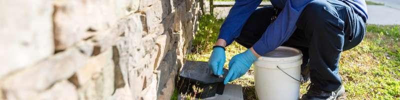 pest eliminators in San Diego