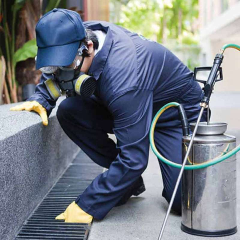 local pest control services in Carmel Mountain Ranch