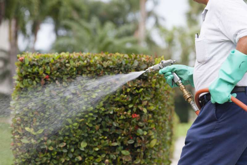 general pest control in San Diego