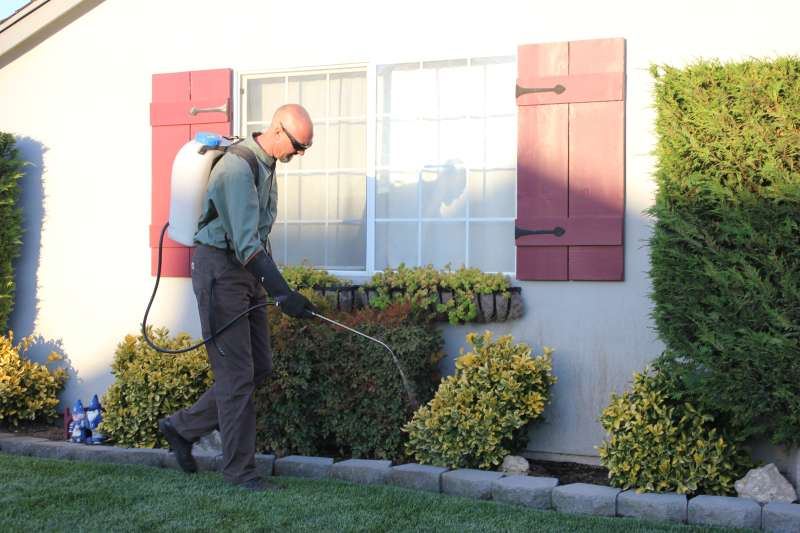 lawn pest control in Blossom Valley