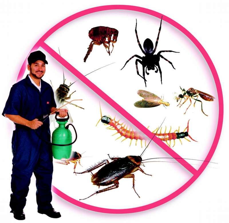 pest control rates in San Diego