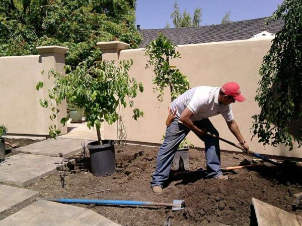 San Diego Landscaping And Pest Control